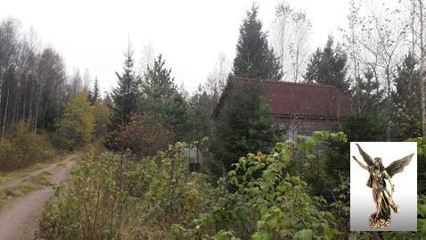 Земельный участок в уютном садоводстве - Фото 5