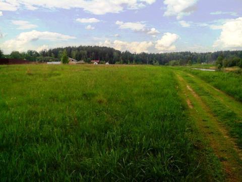 Крайний участок к лесу 15 соток в деревне с газом на берегу реки Москв - Фото 2
